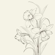 Tied narcissus flowers isolated on white background Stock Illustration
