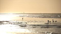Birds at beach Stock Footage