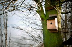 Wooden handmade bird house on a tree outdoors Stock Photos
