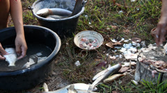 Cleaning and Descaling fish by knife. Stock Footage