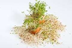 Fresh alfalfa sprouts and spring easter egg Stock Photos