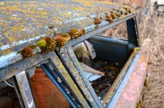 wagon moss - stock photo