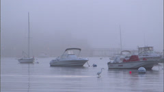 White egret searching for food on a foggy bay morning Stock Footage