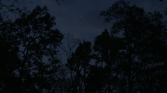 P03524 Night at Kanha National Park in India Stock Footage
