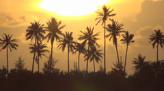 Palm trees and sunset - stock footage
