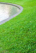 the pond and green grass in the garden. - stock photo