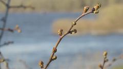 Ukraine, Desna river Stock Footage