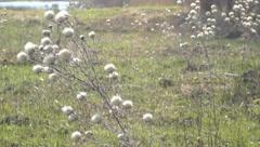 Head dry field plants Stock Footage