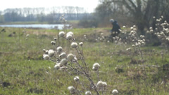 Dried flowers, cyclists Stock Footage
