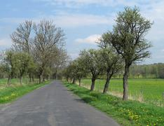 tress along the road in spring - stock photo