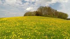 Flight over a meadow of dandelions Stock Footage
