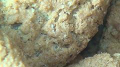 Oatmeal Cookies, Oats, Snacks Stock Footage