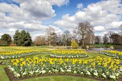 Flower beds with daffodils and primroses near small lake in the park Stock Photos