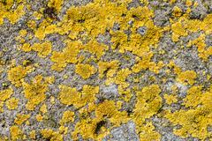 Lichen on concrete Stock Photos