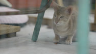 Stock Video Footage of Afraid Cat in Cage