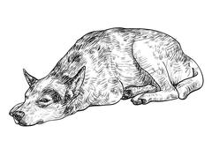 sleepy lonely dog - stock illustration