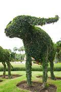 Dwarf into buffalo in the park Stock Photos