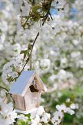 Little Birdhouse in Spring with blossom cherry flower sakura Stock Photos