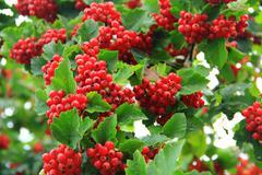Berry. - stock photo