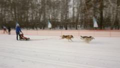 Woman  with hers dog involved in dog sled race Stock Footage