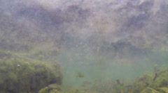fish bottom of lake - stock footage