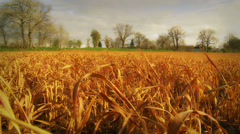 Crops in the Normandy countryside (dolly, vibrant colours) Stock Footage