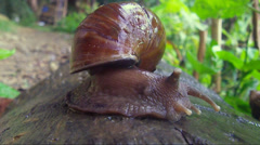 Large snail crawling on old wood. Stock Footage