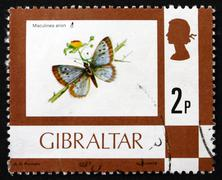 Stock Photo of Postage stamp Portugal 1977 Large Blue, Butterfly