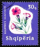 Postage stamp Portugal 1965 Glacier Pink, Flower - stock photo