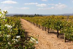 Winery in Australia - stock photo