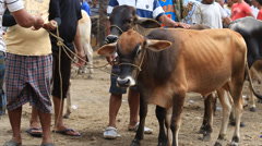 Animals market in the island of Negros, Philippines Stock Footage