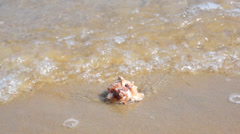 Tides and waves washing a conch on the beach Stock Footage