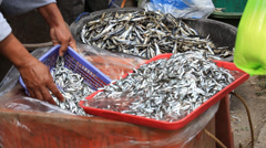 People buying and selling fresh fish on market in island of Negros, Philippines. Stock Footage