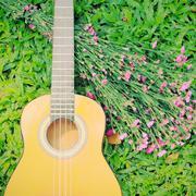 Ukulele kitara vihreää ruohoa ja kukka Kuvituskuvat