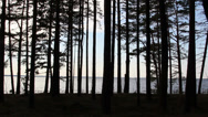 Stock Video Footage of the view of the pine trees during late afternoon