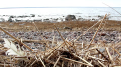 Lots of withered stems on the rocky ground Stock Footage