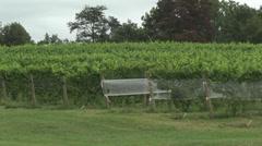 Vineyard at harvest trellised rows telephoto Stock Footage