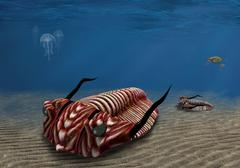 Trilobite Stock Illustration
