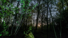 4K UHD moonrise in dark forest time lapse 11328 Stock Footage