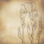 sketch iris background - stock illustration