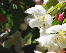 White Spring Flower Stock Photos