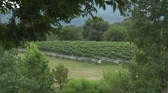 Vineyard at harvest beauty shot Stock Footage