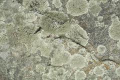 Fungus On Stone Texture - stock photo
