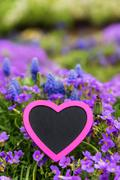 Pink heart in front of lilacbush and grape hyacinth Stock Photos