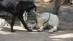 Sad dog tied Stock Footage