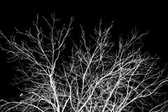 Bare tree branches on a black background Stock Photos