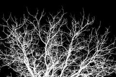bare tree branches on a black background - stock photo