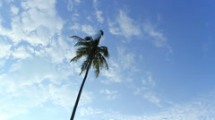 Coconut palm in the sky (Malaysia - Perhentian Islands) Stock Footage