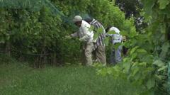 Vineyard crew harvesting grapes Stock Footage