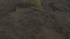 Trees burnt gloomy Stock Footage